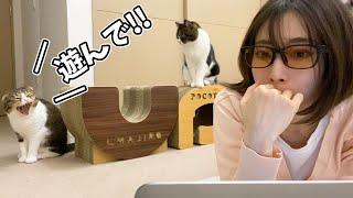 仕事中のママに対してかまちょの圧がだいぶ強い猫w