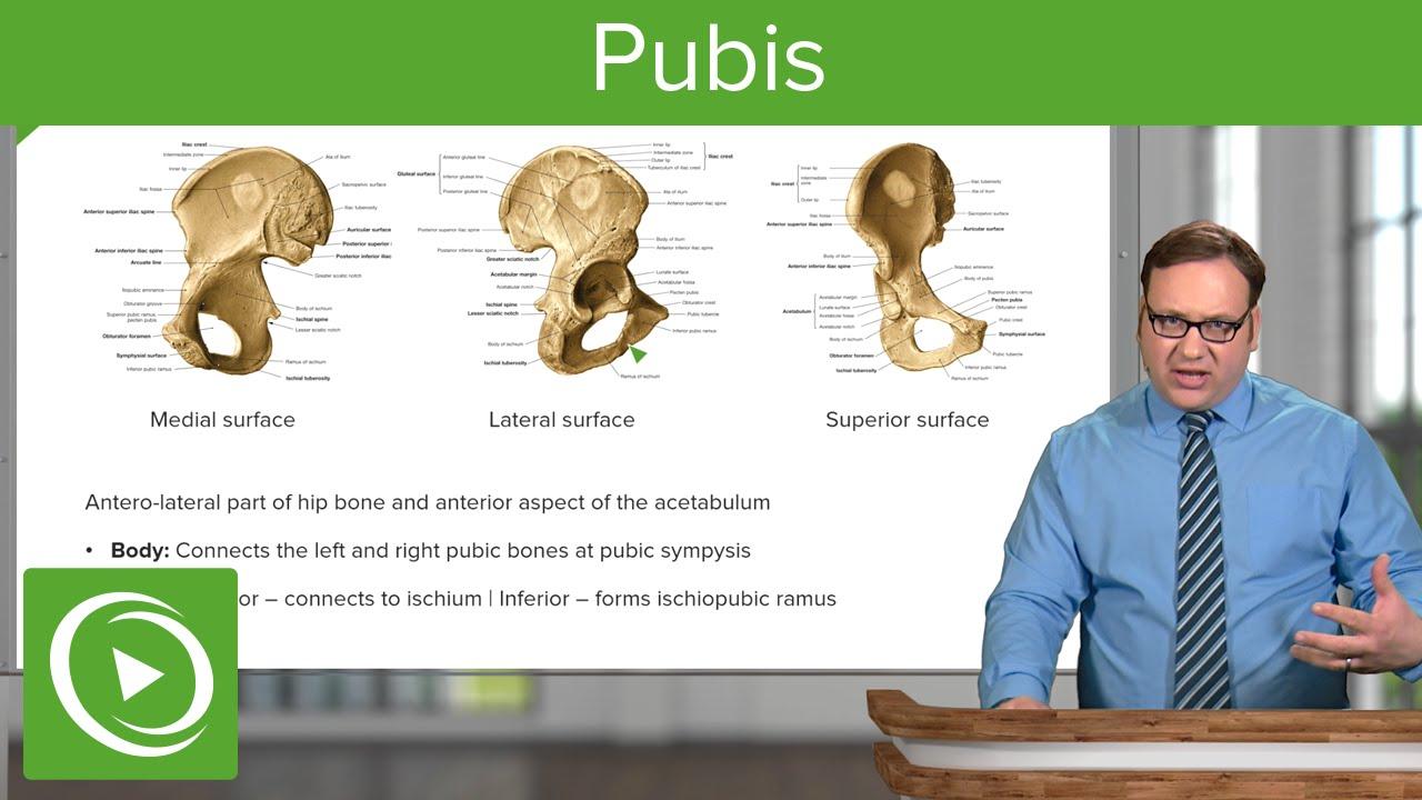 Pubis Superior Inferior Pubis Anatomy Lecturio Youtube