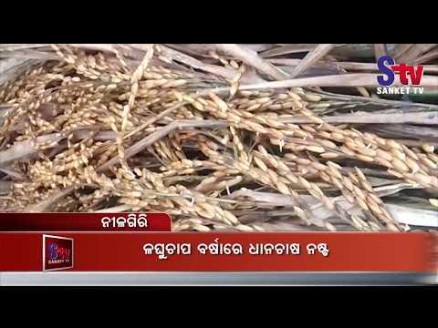 Crops damaged in Balasore district due to unseasonal rains