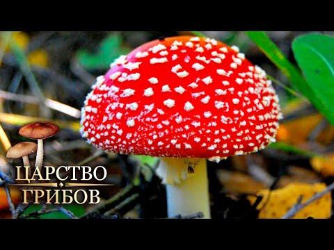 Ядовитые грибы. Царство грибов @Моя Планета