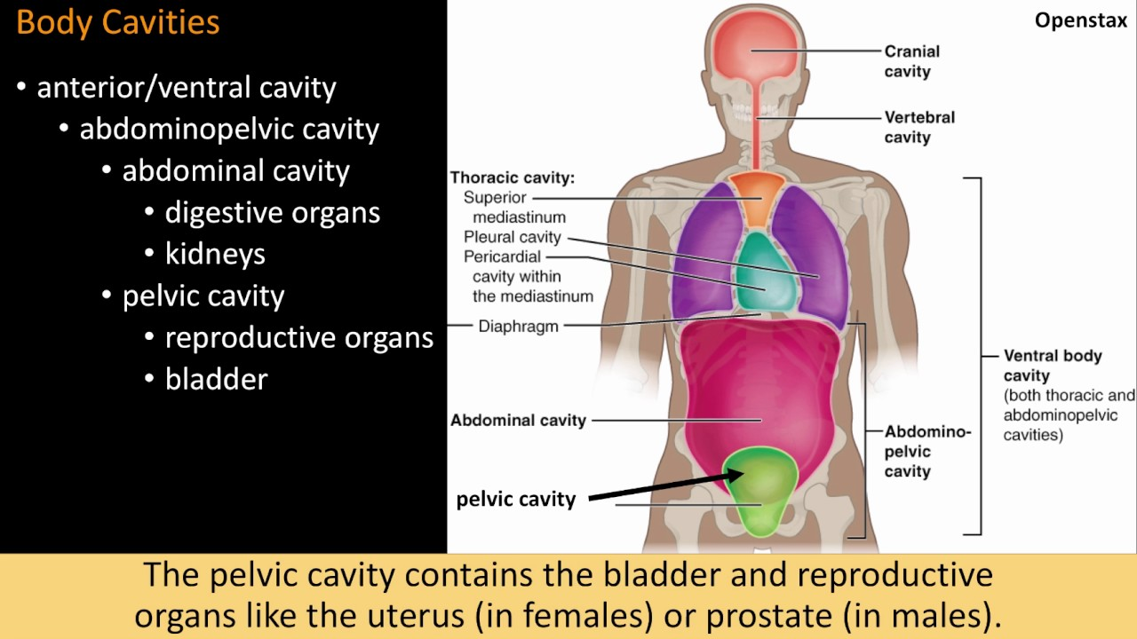 01c Cavities And Membranes Youtube