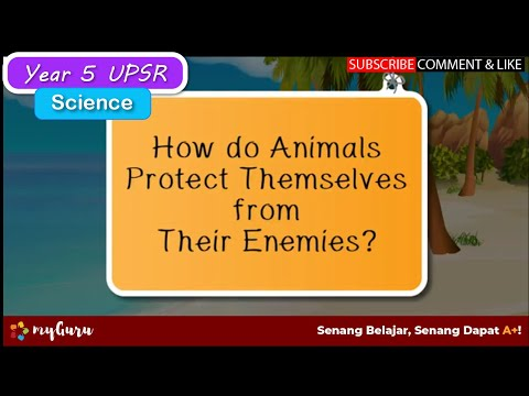 Year 5 | Science UPSR | How Animals Protect Themselves From Their Enemies?