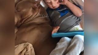 Cute Kid Sleeping Next his Pitbull