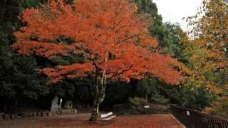 The four seasons in Kyoto(Japan), Autumn colors(2011-2012)【2011~12年の四季の京都、秋・紅葉】