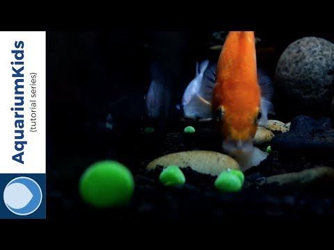 How Do You Prepare Peas For Goldfish? (HD)