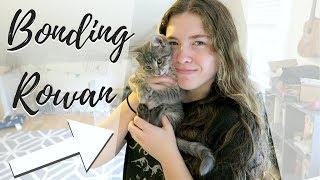 Socializing Our Stray Kitten