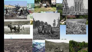 Где старые деревья?  Факты из истории и разоблачение.