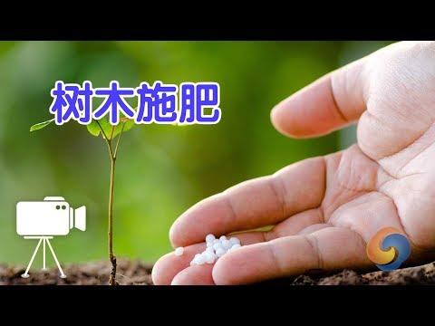 如何给树木施肥?|树木种植Tree fertilization