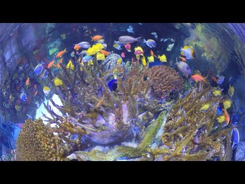 360° Video: Inside The Indo-Pacific Coral Reef Exhibit!