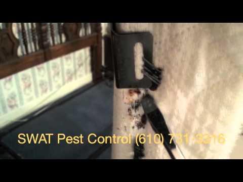 philadelphia-bed-bug-treatment-&-extermination