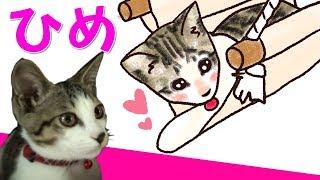 やきとり屋さんで生まれた赤ちゃん猫の「姫」ちゃんはテレビがだ~い好き・・・の巻 thumbnail
