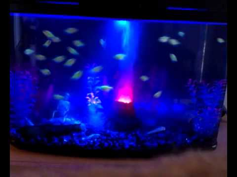 Blacklight fish tank w glofish youtube for Black light for fish tank