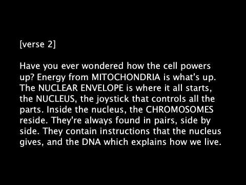 animal cell rap youtube