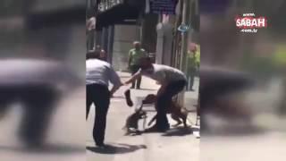Başıboş dolaşan pitbull cinsi bir köpek,dehşet saçtı.