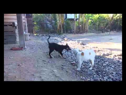 Kucing Vs Anjing 3gp Doovi