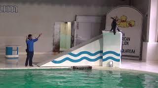 冬も楽しいおたる水族館 冬期営業開始!画像