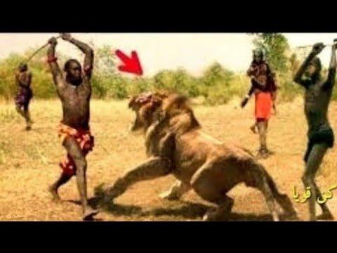 شاهد صراع الحيوانات مع البشر شئ لا يصدق Youtube