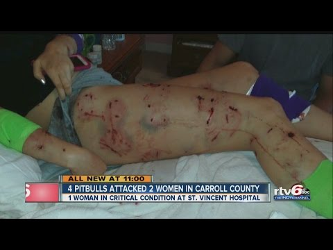 Four pit bulls attack two women in Carroll County
