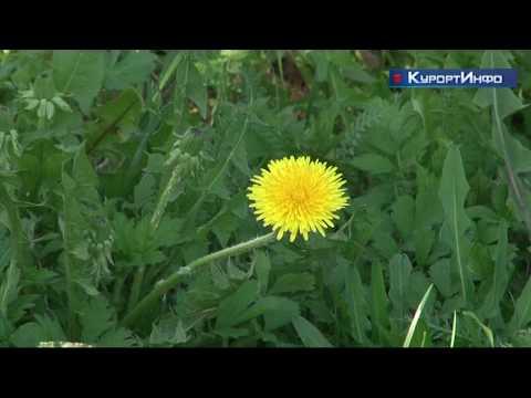 Как справиться с аллергией в пик цветения растений