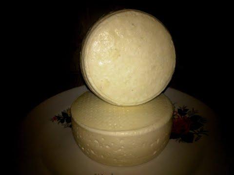 Сулугуни рецепт из козьего молока в домашних условиях