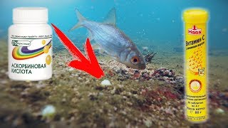 Реакція риби на ШИПУЧІ АСКОРБІНКУ, ДРАЖЕ ВІТАМІН С, БРУДНОГО МОТИЛЯ І ПРИКОРМКУ Підводне відео