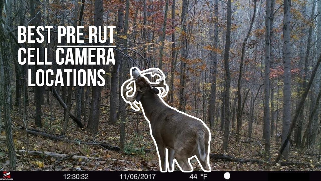Best PRE RUT Cell Camera Locations to find Mature Bucks