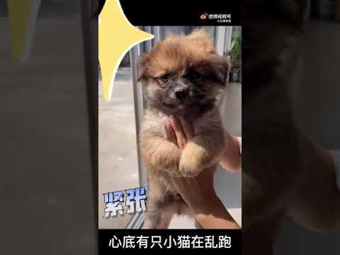 Chú chó 🐕 nhỏ đáng yêu nhất thế giới