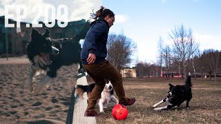 Worlds Most Talented Border Collie Dogs