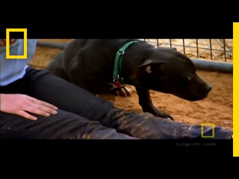 Michael Vick's Dogs | National Geographic