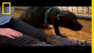 Michael Vick's Dogs   National Geographic