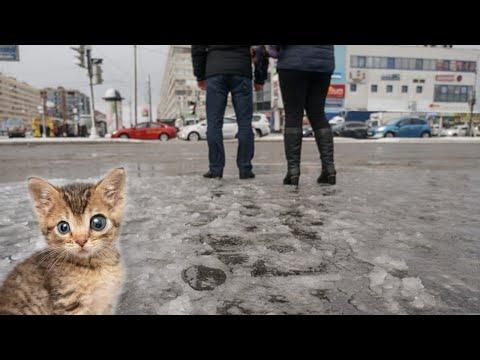 Котёнок размером ладошку оказался за 19 февраля