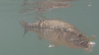 Strike King Spinnerbait Large Mouth Bass Fishing