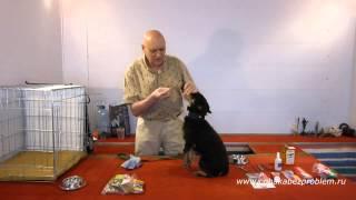Как убрать зубной камень и почистить зубы собаке