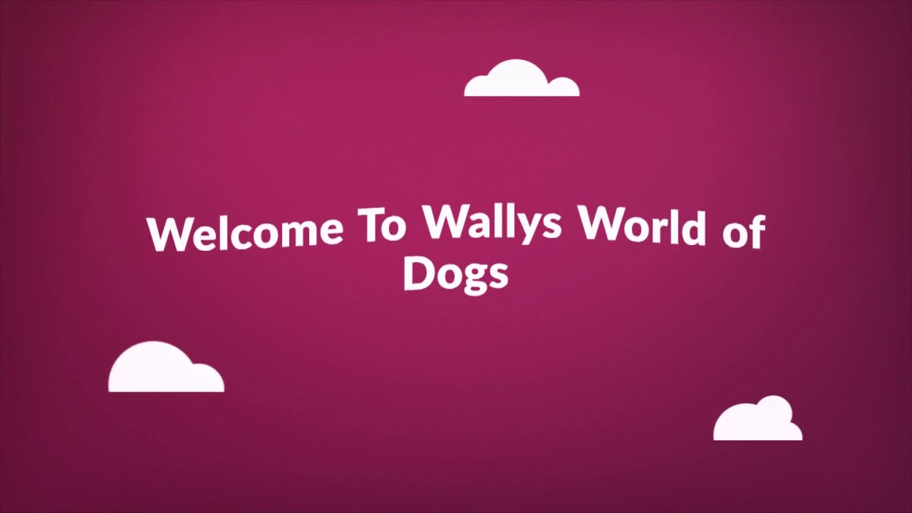 Wallys World of Dog Trainers in Long Island, NY