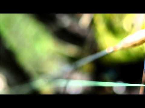 Fly Fishing Movie from Radovna