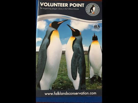 Falkland Islands and The Penguins of Volunteer Point