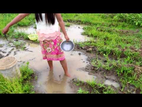 Survival Skills Primitive Beautiful girl fishing catch fish by hand in tiny creek | traditional fis