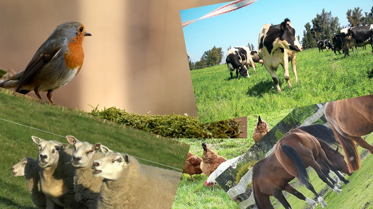 Tiere kennenlernen youtube