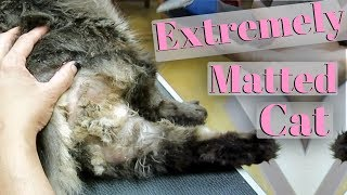 Severely Matted Cat