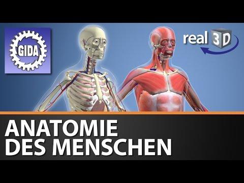 GIDA - Anatomie des Menschen - Biologie - real3D Software - DVD ...