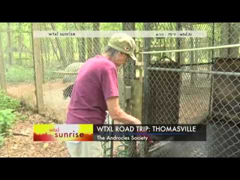 Road Trip to Thomasville:  Androcles Society Wildlife Sancut