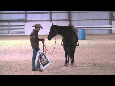 Training an Off the Track Thoroughbred Part 3 - Advantage Horsemanship TV