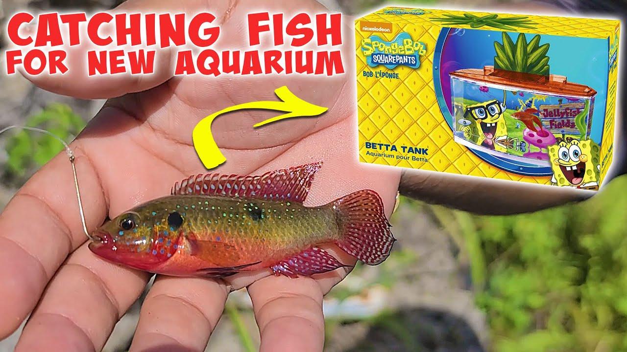 Catching PET FISH for SPONGEBOB AQUARIUM! Micro Fishing