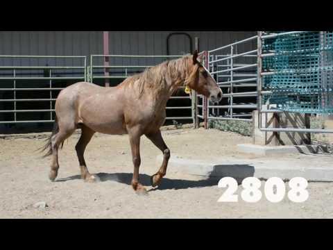 Oregon Wild Horse Adoption, July 2016