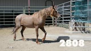 Oregon Wild Horse Adoption, July 2016