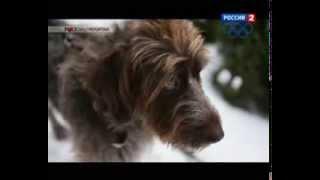 Обзор Gps трекера для собак
