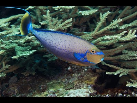 4K CORAL REEFS of the SOLOMON ISLANDS