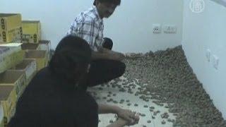 10 тысяч черепах в чемодане конфисковали на таможне (новости)