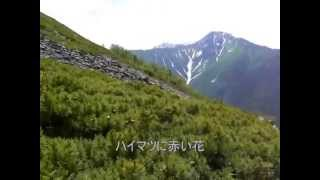 Japan southern Alps Mt.Houou and Ridge of hayakawa 南アルプス 鳳凰山、早川尾根の旅