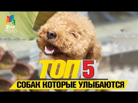 Tоп 5 собак которые улыбаються   Top 5 dogs that smile